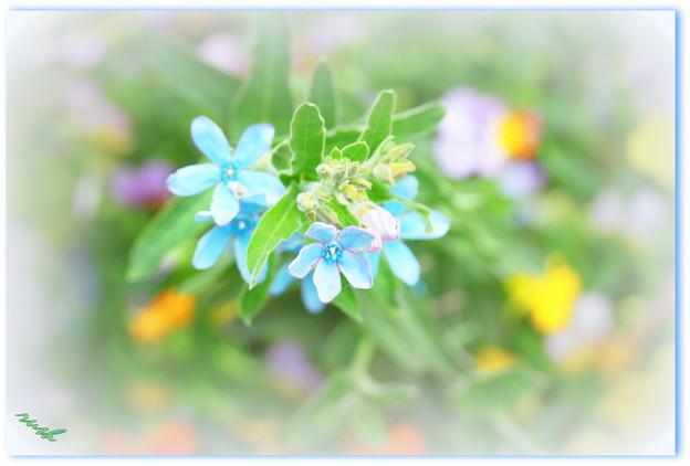 お花のパレット