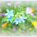 Photos: お花のパレット