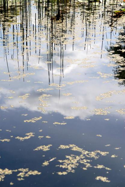 池の中の雲