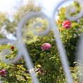 Photos: 背もたれから見えてきた花