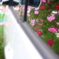 Photos: 車の中も花一杯~☆