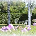 白樺と白い椅子