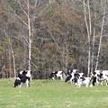 フカフカな牧草地