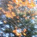 ☆金の成る木
