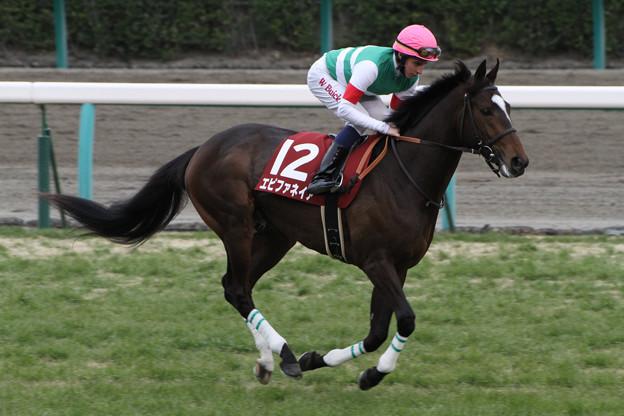 Photos: エピファネイア 返し馬(13/03/03・第50回 報知杯弥生賞)