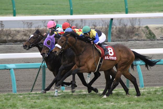 Photos: カミノタサハラ レース(13/03/03・第50回 報知杯弥生賞)
