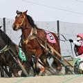 オオゾラサトミ レース(21/02/07・1R)
