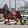 スズクイン レース_1(21/02/06・2R)