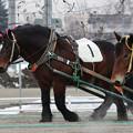 キタノキセキ レース(21/02/06・6R)