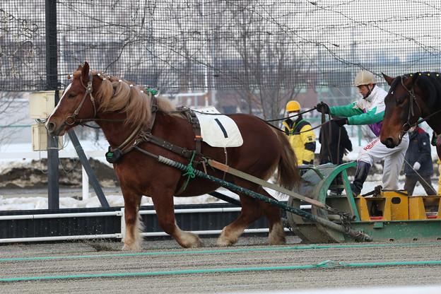 ミヤビラッシュ レース_1(21/02/06・5R)