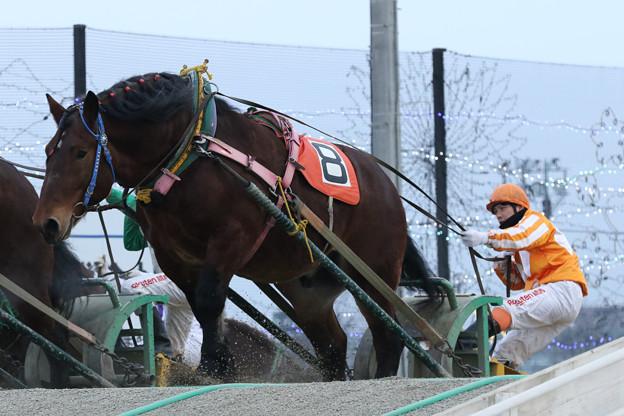 ホクトウォーカー レース(21/02/06・7R)
