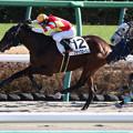 ブラックロータス レース(20/12/20・新馬戦)