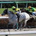 グローサーベア レース(20/12/20・7R)