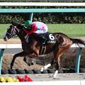 キタノヴィジョン レース(20/12/20・香取特別)
