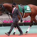グレナディアガーズ パドック(21/03/20・第35回 中日スポーツ賞ファルコンステークス)