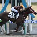 モズピンポン レース(21/03/27・6R)