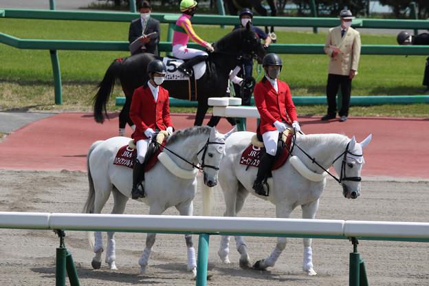 中山競馬場 誘導馬_1(21/04/11)