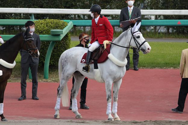 中山競馬場 誘導馬・ウィニー_5(21/04/11)