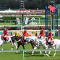 中山競馬場 誘導馬_7(21/04/11)