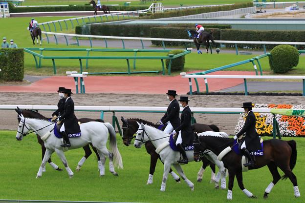 第23回 中山グランドジャンプ 誘導馬_4(21/04/17)