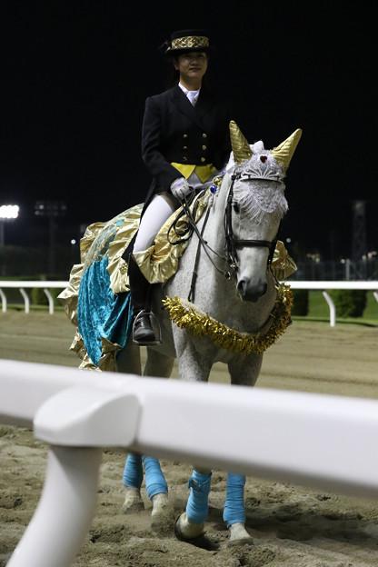 川崎競馬場 誘導馬_1(21/04/21)