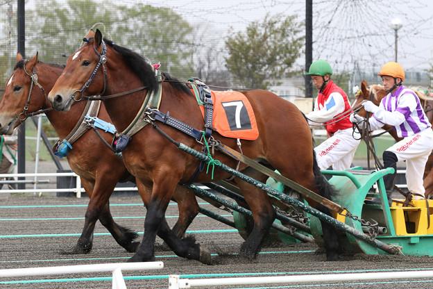 ジェイホースワン レース_1(21/05/09・新馬戦)