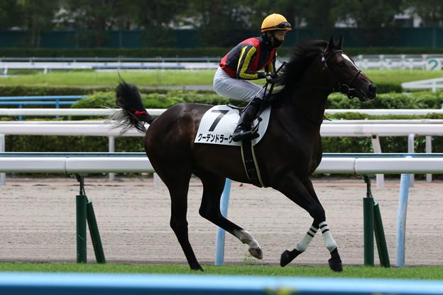 グーデンドラーク 返し馬(21/07/18・新馬戦)