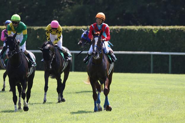 トゥルボー レース後(21/07/31・第23回 新潟ジャンプステークス)