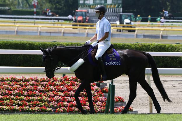 新潟競馬場 誘導馬・サーストンリンク_1(21/07/31)