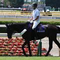 Photos: 新潟競馬場 誘導馬・サーストンリンク_1(21/07/31)