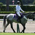 Photos: 新潟競馬場 誘導馬・トラキアンコード_3(21/07/31)