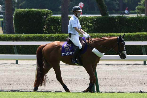 新潟競馬場 誘導馬・イサチルキンノホシ_5(21/07/31)
