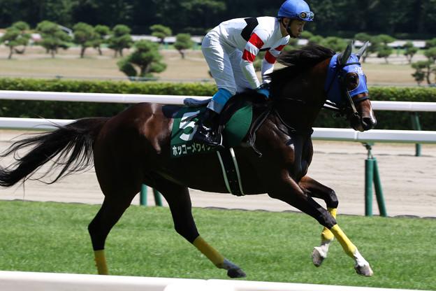 ホッコーメヴィウス 返し馬(21/07/31・第23回 新潟ジャンプステークス)