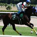 Photos: ホッコーメヴィウス 返し馬(21/07/31・第23回 新潟ジャンプステークス)