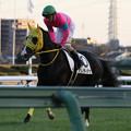 マリノディアナ 返し馬(19/11/30・12R)