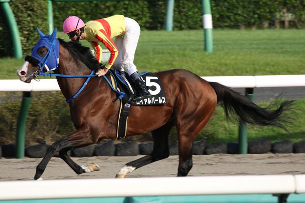 ロイヤルパールス 返し馬(21/09/25・ながつきステークス)