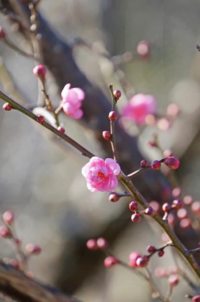 春のかおり