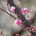 Photos: 春のかおり