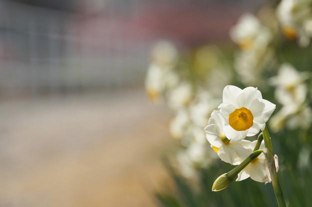 春はこちらへ