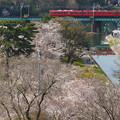 Photos: 桜を乗せて