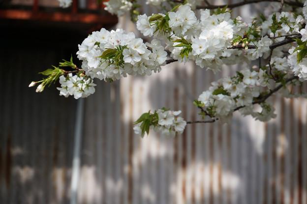 愛でる人はいなくても花は咲く