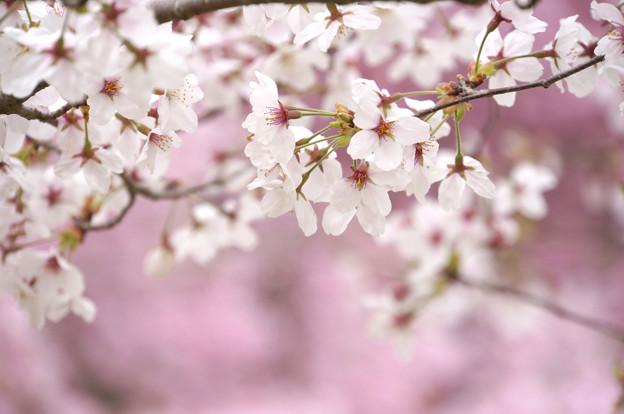 花舞う季節