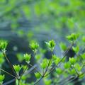 新緑トルネード