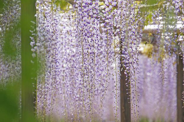 花シャワー