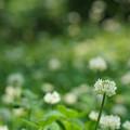 白詰草の公園