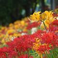 Photos: 花園