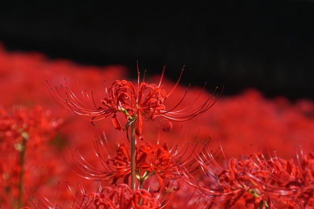 Photos: RED
