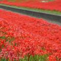 Photos: 赤い川辺