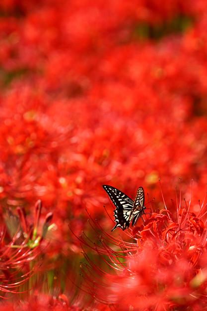 Photos: 蝶を追いかけて