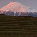 富士の夕べ